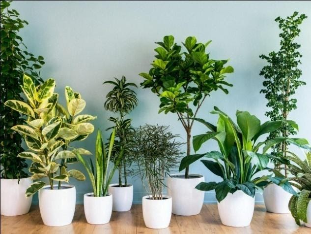 todo sobre las plantas de interior