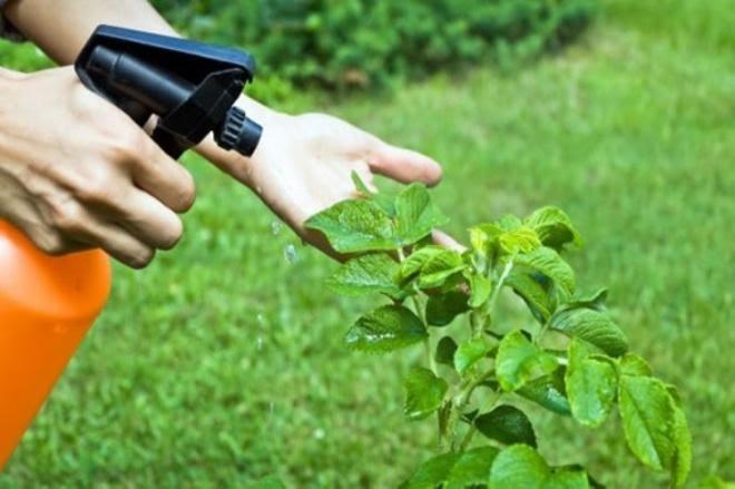 cuidado de una planta medicinal