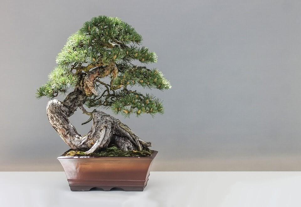 diseño de un bonsái