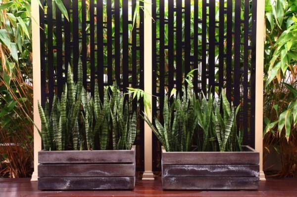 cuidado de las plantas de exterior