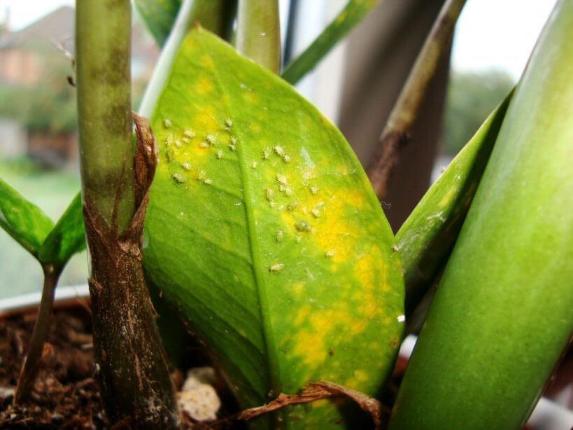 controlar plagas en plantas