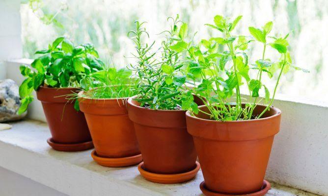 Todo sobre las plantas aromaticas