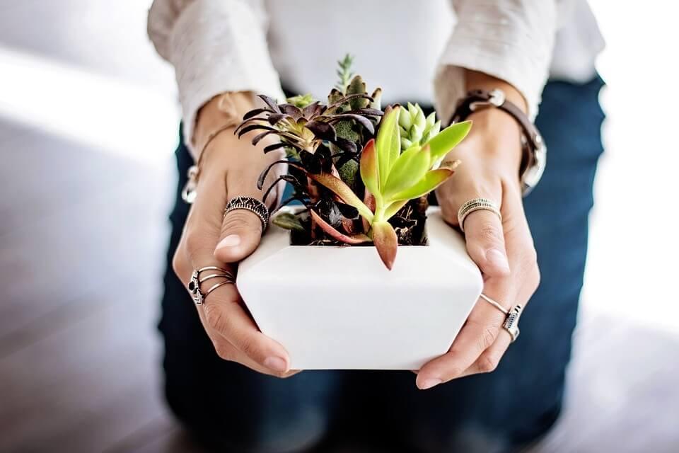 Plantas crasas o suculentas